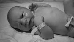 Baby Bailey-Dalton 286e